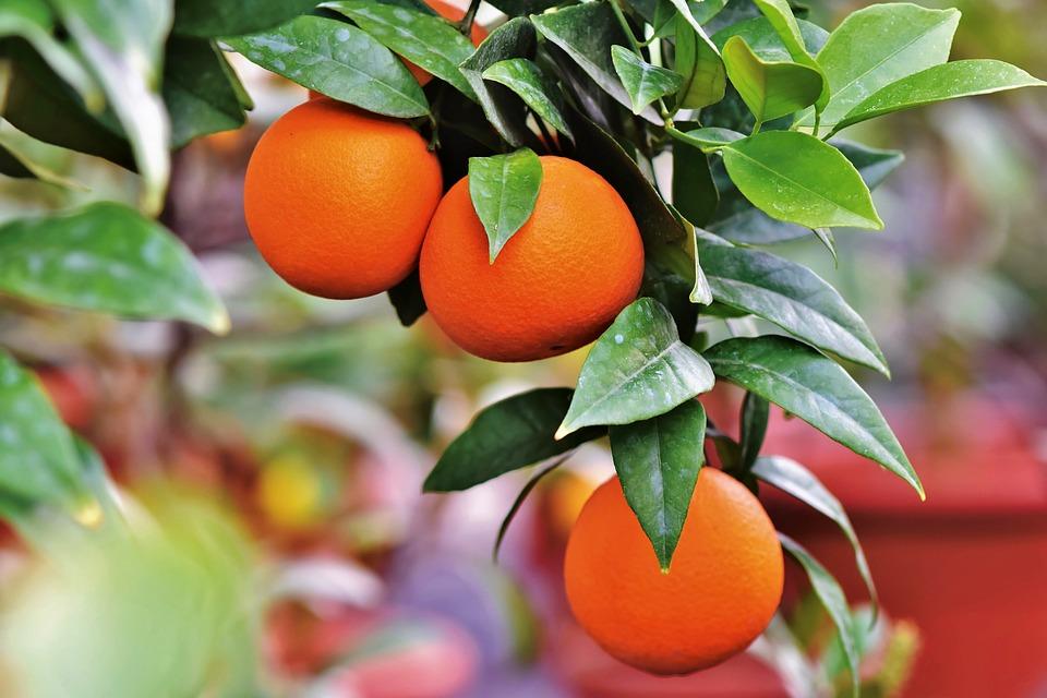 Orangenlikör selber machen